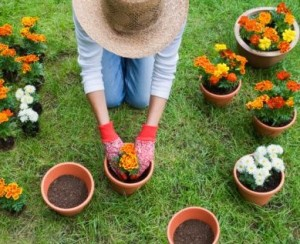 consejos-macetas-jardineria