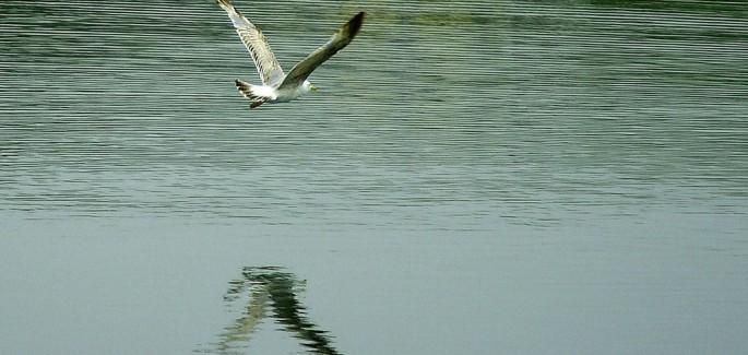 Le radici e le ali