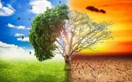 The Year Laudato Si: A Focus on Creation