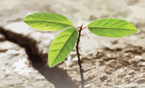 Planting the roots of resilience
