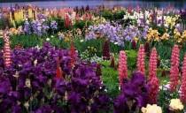 Kwiaty w ogrodzie Boga