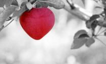 Amoris Laetitia – cz. 4 – Miłość a płodność