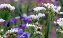Kwiat z ogrodu pokory