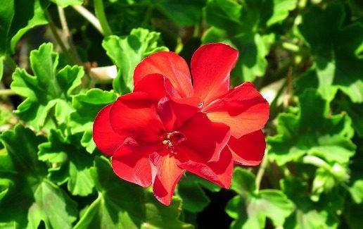 Maryja kwiat ludzkości