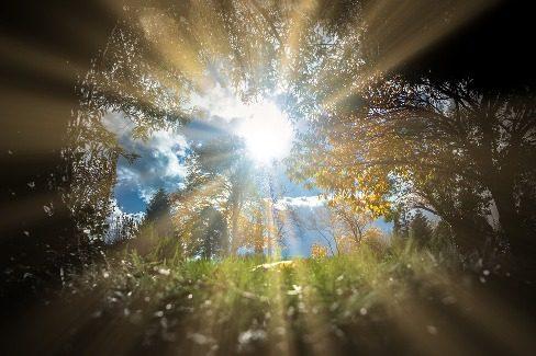 Każdy na swoim promieniu, razem ku słońcu