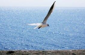 Giordani: Con l'Eucaristia si vola!