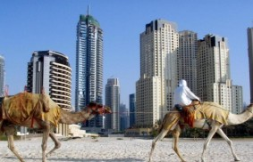 Dubai: those desert flowers, testimonials amid the skyscrapers