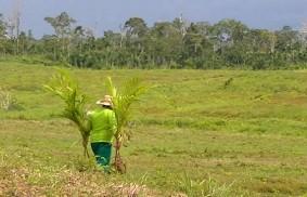亞馬遜:用心的環保人士