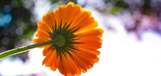 瑪利亞——人類之花